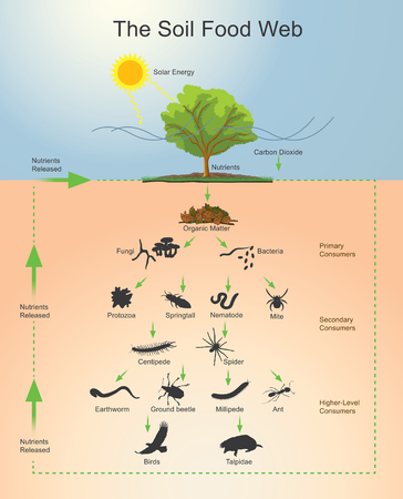 The soil food web is the community of organisms living all or part of their lives in the soil. It describes a complex living system in the soil and how it interacts with the environment, plants, and animals. Vector, Illustration. Stock Illustratie