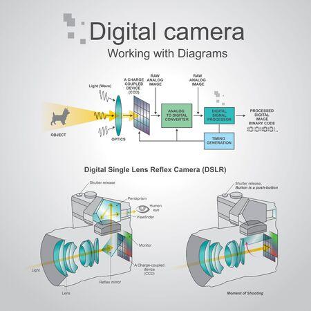 Una fotocamera digitale reflex è una fotocamera digitale che combina l'ottica e meccanismi di una fotocamera reflex con un sensore di immagini digitali, al contrario di pellicola fotografica. Lo schema di disegno riflesso è la differenza principale tra un Vettoriali