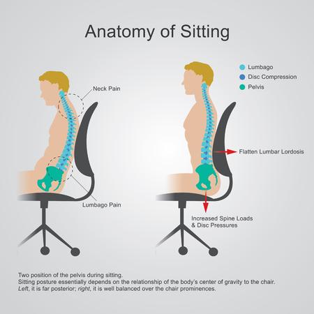 Anatomy Of Sittingthe Lumbar Region Is Sometimes Referred To