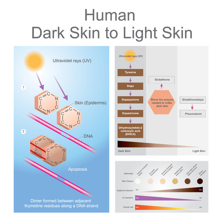 light brown hair: Both ultraviolet can damage dan in the skin, which can lead to skin cancer. Illustration, Vector.