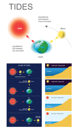 Gravitational pull between moon and earth, Gravitational pull between sun and earth. Illustration
