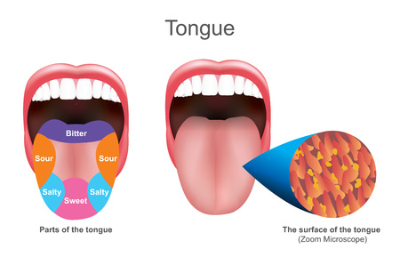 The tongue also serves as a natural means of cleaning the teeth.It is of importance in the digestive system and is the primary organ of taste in the gustatory system. Education info graphic. Vector design.