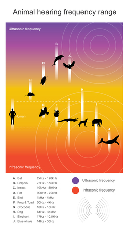 Animal hearing frequency range. Hearing range describes the range of frequencies that can be heard by humans or other animals, though it can also refer to the range of levels.