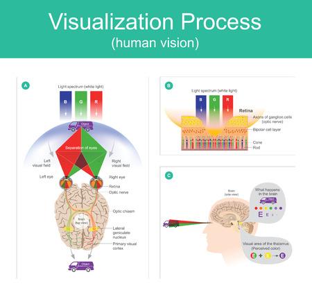 시각화 프로세스는 인간의 두뇌에 의해 환경의 물체를 반사하는 가시 스펙트럼의 빛을 사용하여 주변 환경을 해석하는 기능입니다.