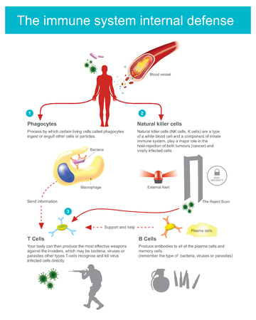 Process by which certain living cells called phagocytes ingest of engulf cells or particles. Stock Illustratie