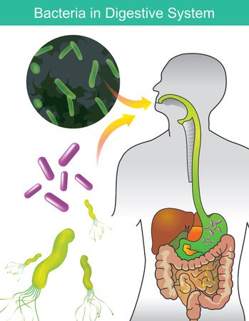 Bacteria in Digestive System. Illustration info graphic.