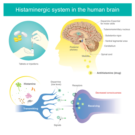 Antihistamines are drugs which treat allergic rhinitis and other allergies. Affects the perception of the nervous system and brain. Histamine Vector illustration.