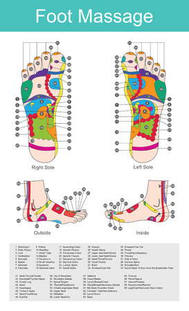 While various types of reflexology related massage styles focus on the feet, massage of the soles of the feet is often performed purely for relaxation or recreation. It is believed there are some specific points on our feet that correspond to different organs in the body.