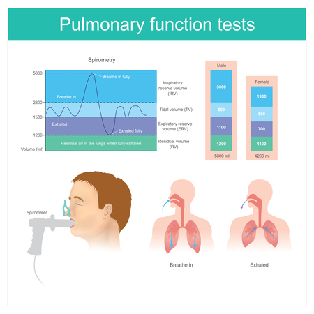 Pruebas de función pulmonar. Prueba del volumen de aire en los pulmones durante la inhalación y la exhalación completa.