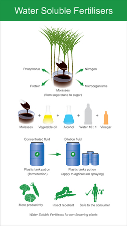 Water soluble fertilisers. Sugarcane molasses is fermented to produce microorganisms. Illustration