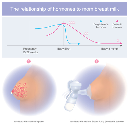 Mom can stimulate the milk flow by pumping or squeezing to stimulate the mammary gland.