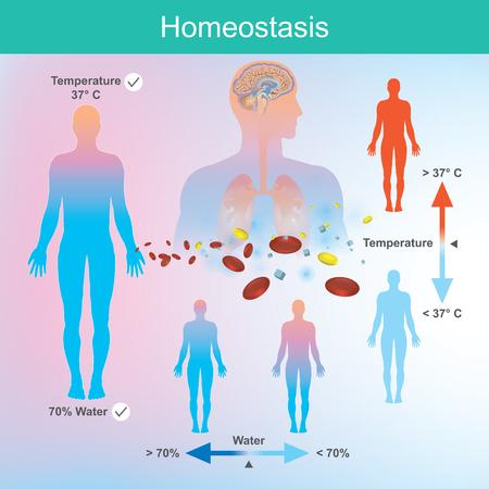 Człowiek potrzebuje odpowiedniej ilości wody i temperatury ciała. Układ nerwowy i mózg reagują na zmiany, gdy takie nieprawidłowości zostaną wykryte. Ilustracje wektorowe
