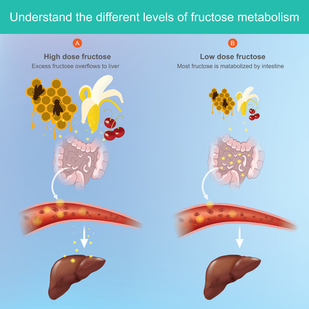 Fructose comes from the fruit and can be absorbed into the blood stream.