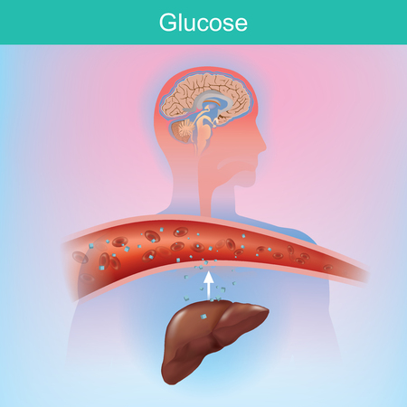 Glucose is a sugar that the body creates naturally by chemical process from the liver. Glucose is important to various cells. Especially at the brain