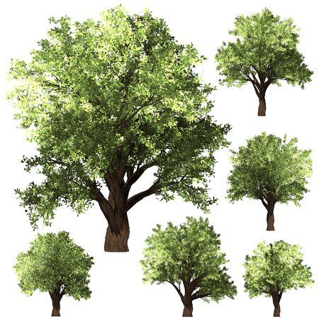 Green Forrest tree background. 2 set Illustration tree. Stock Photo