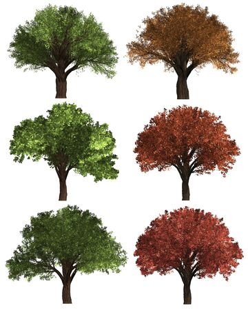 Green Forrest tree on white background. set of Illustration tree. Imagens
