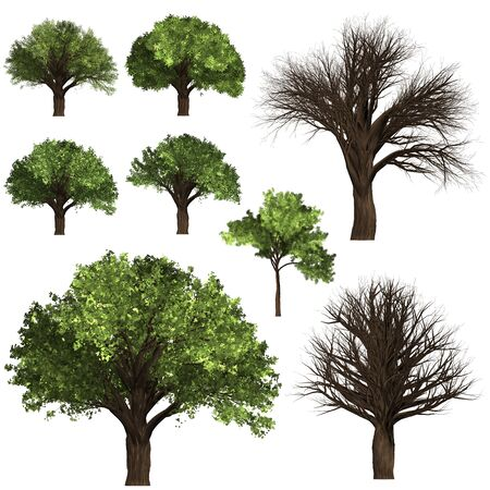 Green Forrest tree background. 3D Illustration. White background isolate. Nature and Gardens design.