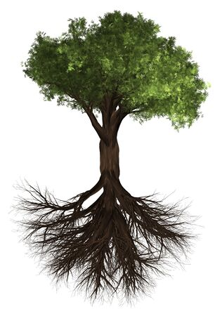Tree and root. Green Forrest tree background. 3D Illustration. White background isolate. Nature and Gardens design.