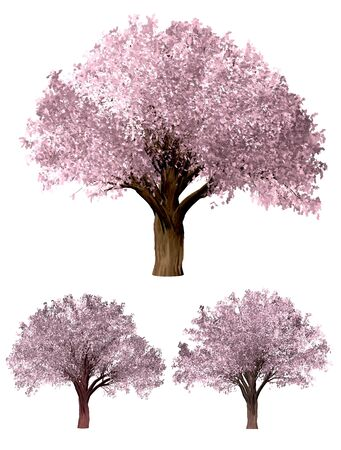 Sakura tree. Green Forrest tree background. 3D Illustration. White background isolate. Nature and Gardens design.