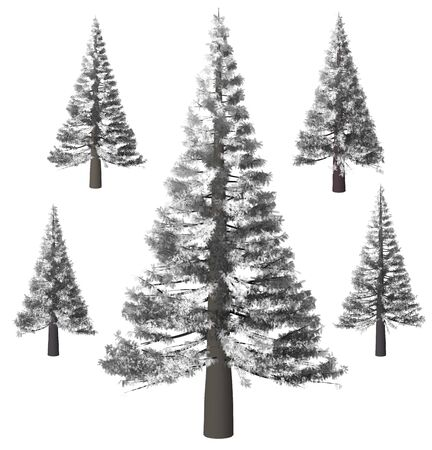 Christmas tree, Pine. Winter forrest tree background. 3D Illustration. White background isolate. Nature and Gardens design.