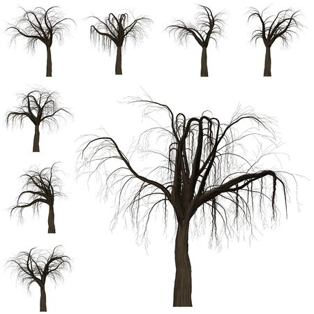 Tree branch background. 3D Illustration. White background isolate. Nature and Gardens design. Stok Fotoğraf - 132285753