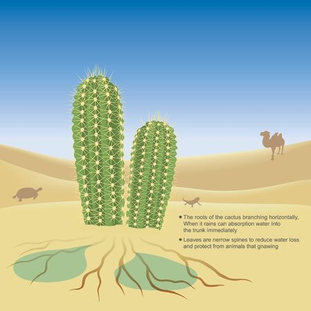 Explain illustrate of the cactus live in desert a very hot and dry climate. 3D Illustration.