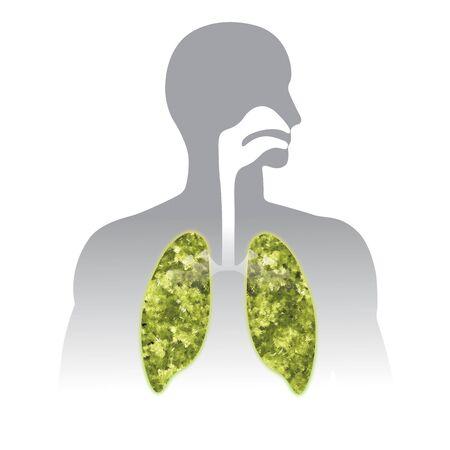 Fresh breath. Green Human lung illustration info graphic. Human body parts. Фото со стока