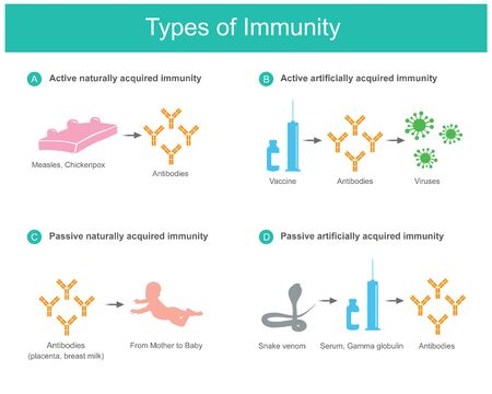 Types of Immunity. Illustration for education medical use about types of human immunity from natural and And synthetic such as vaccine or serum.