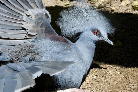 Birds of grandeur photo