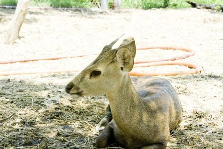 Less deer. photo