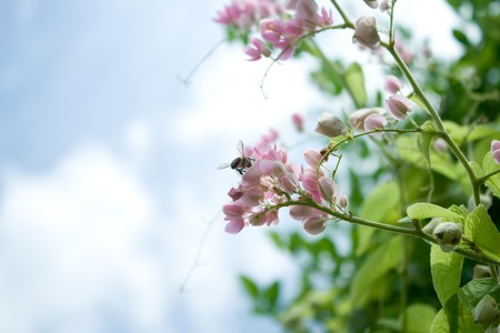 Little pink flowers with bees. photo