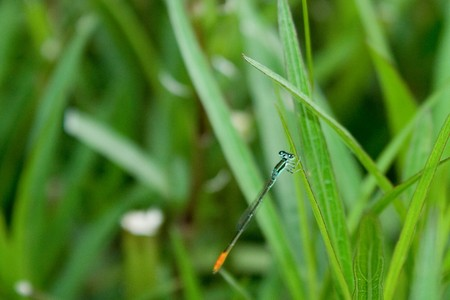 Dragonfly on top of grass. photo
