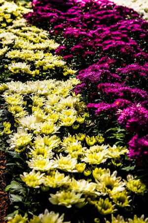 Color flower in row  photo
