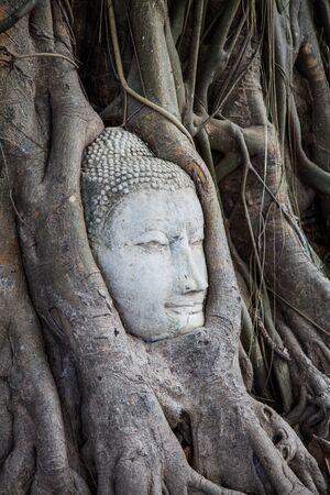 Buddha head in the tree photo