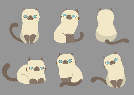 Set of cats in different poses on grey background. Vector illustration character design.