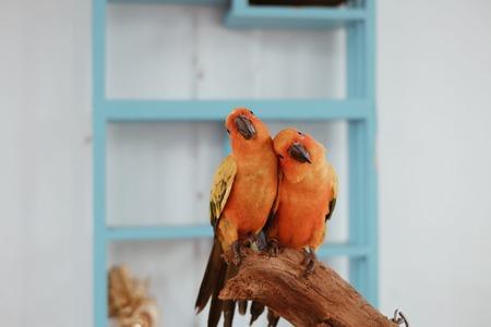lovely: Two lovely Parrot