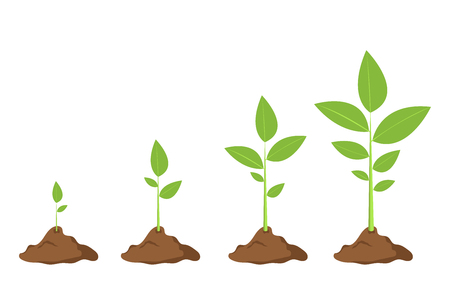 Growing steps of a plant vector design illustration isolated on white background