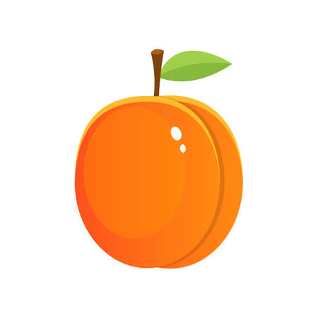 Fresh apricot vector design illustration isolated on white background Vektorgrafik