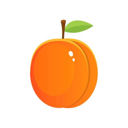 Fresh apricot vector design illustration isolated on white background Vetores
