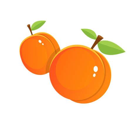 Fresh apricot vector design illustration isolated on white background  イラスト・ベクター素材