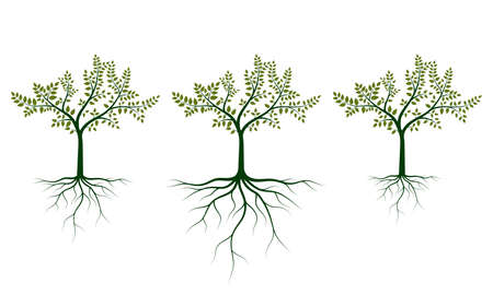 Tree with roots vector design illustration isolated on white background