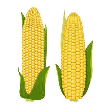 Corn vector design illustration isolated on white background Vettoriali
