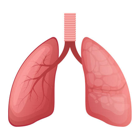 Lungs vector design illustration isolated on white background Vetores