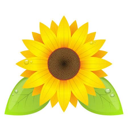 Sunflower vector design illustration isolated on white background