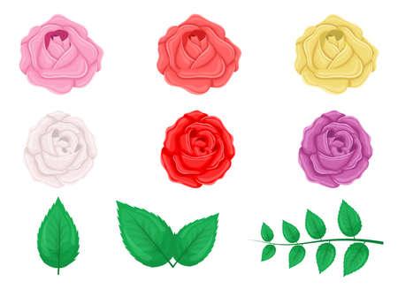 Rose set vector design illustration isolated on white background
