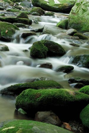 runoff: Great Smoky Mountains NP Stream