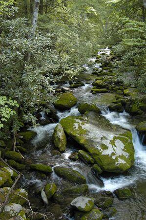 great smokies: Great Smoky Mountains Stream