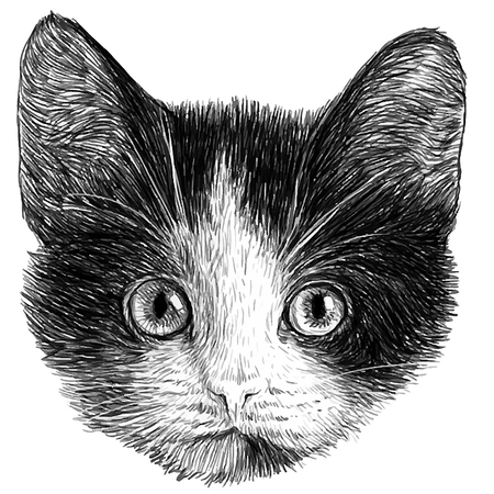 animal head: Cat Head black and white animal drawing vector illustration.