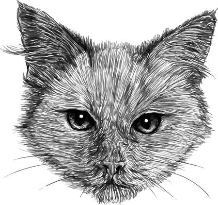 animal head: Cat Head, black and white animal drawing illustration.