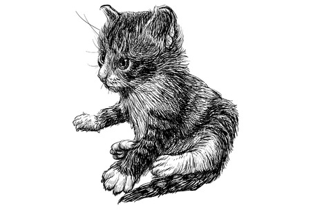 grey cat: A kitten draw monochrome illustration.